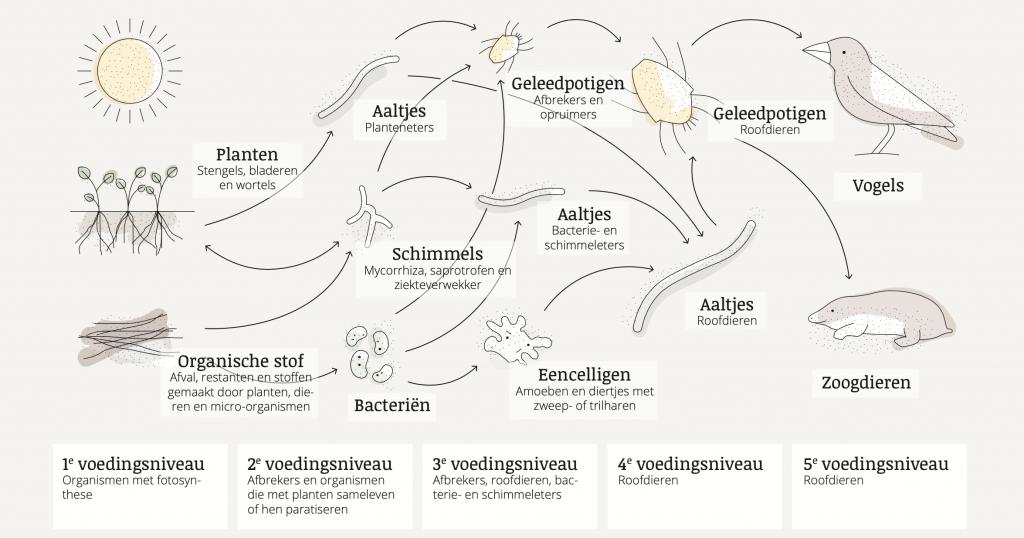Het bodemvoedselweb